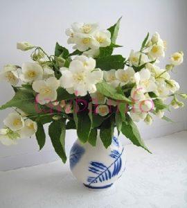 Традиционные цветы разных стран